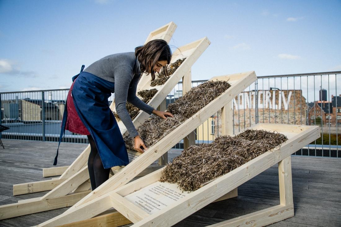 Kathryn Larsen Seaweed Thatch