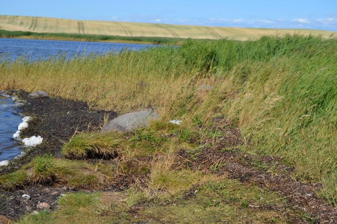 Kathryn Larsen Seaweed Thatch - Roskilde Eelgrass