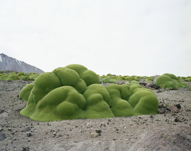 Rachel Sussman, Llareta #0308-2B31 (2,000 + years old; Atacama Desert, Chile), 2008. Image © Rachel Sussman